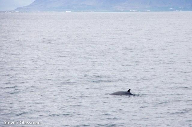 whalewatching-2