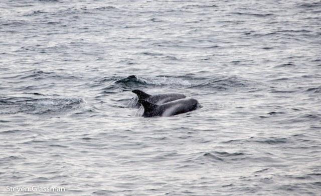 whalewatching-5