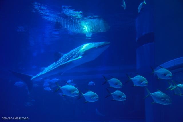 osaka-aquarium-10