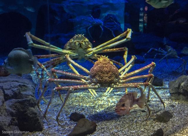 osaka-aquarium-14