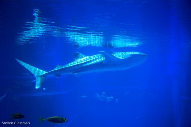 osaka-aquarium-9